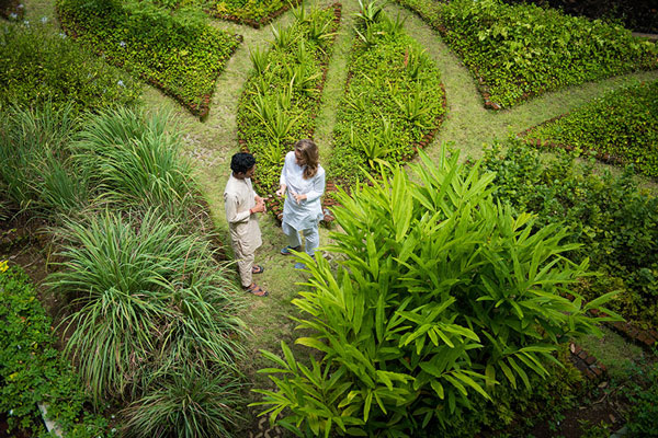 Herbal garden at ONEWORLD Ayurveda Bali